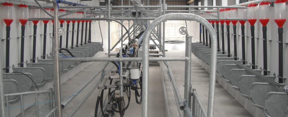Dowling Concrete Milking Parlour